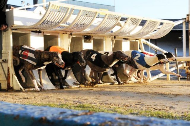 dog-racing-stag-weekends